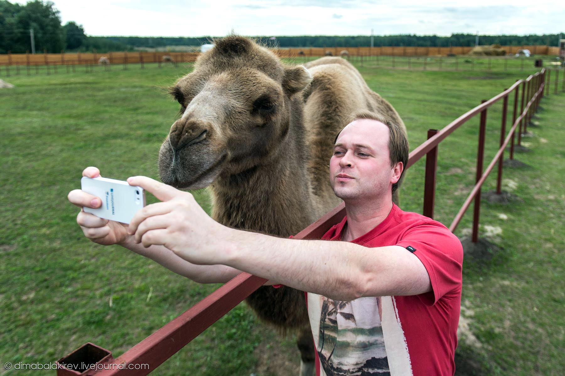 Блогеры и животные