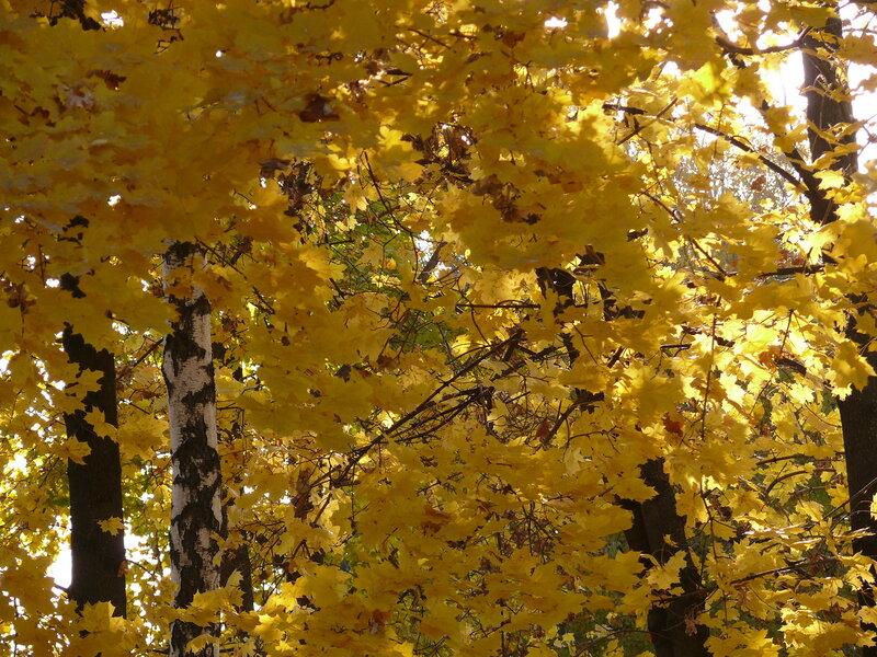 хитрые рыжие листья....JPG