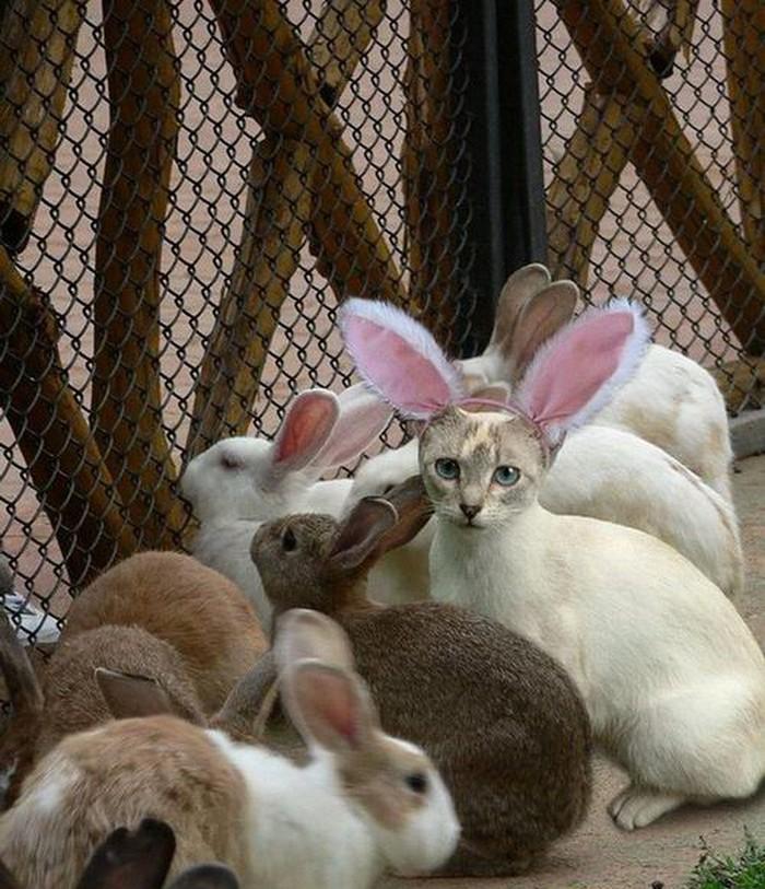17. Кролики — это новые котики.