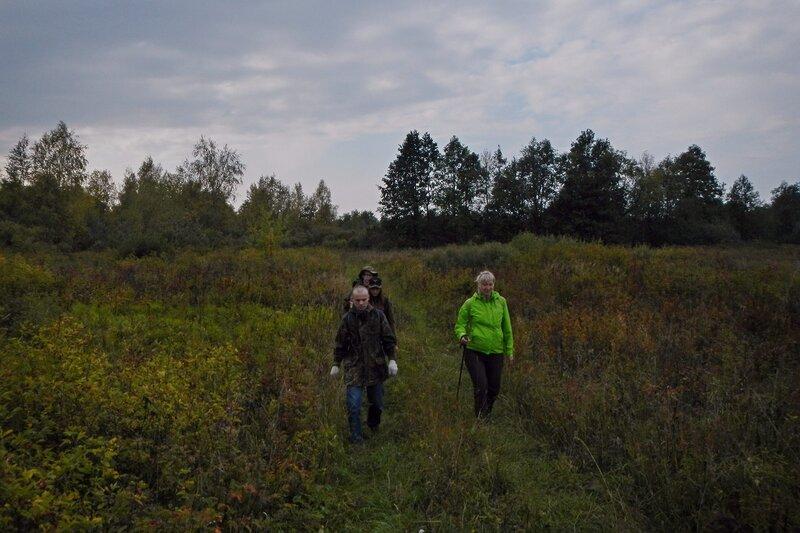 дорога в Заречье. Осенние деревья и кусты шиповника