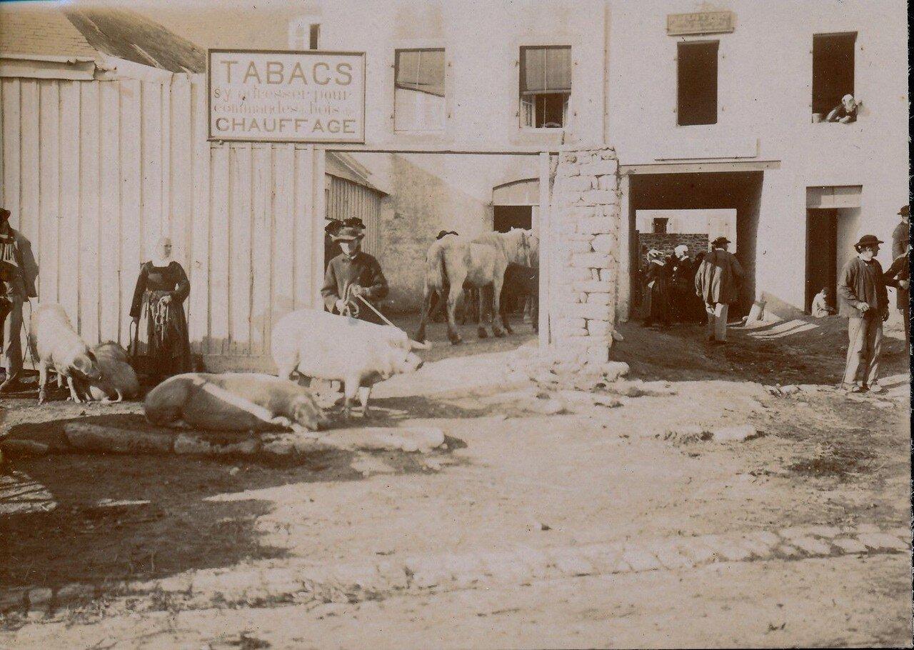 1900. Кемпер. Торговля свиньями на местном рынке