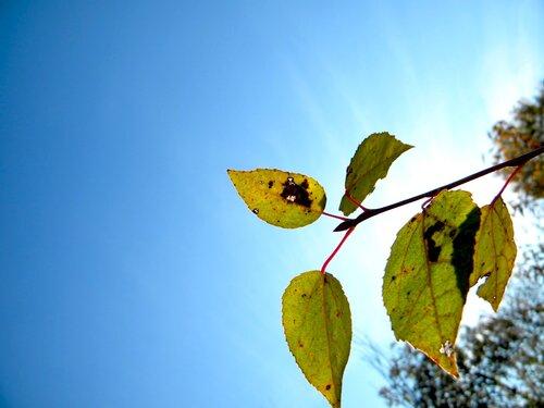 Осень*