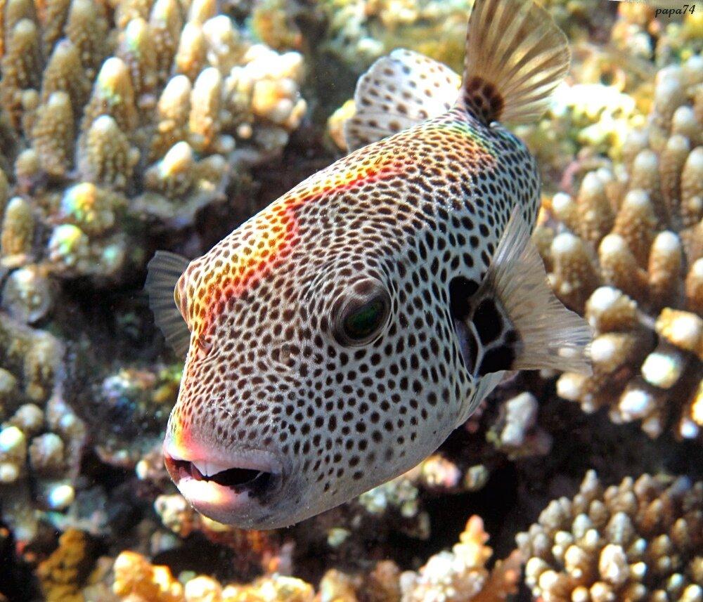 ленты один фото ядовитых рыб египта сегодня вспоминаем том