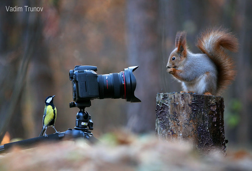 What to give a squirrel, so that it is up?