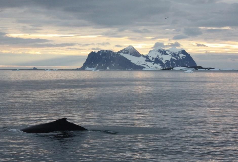 Ледниковый щит имеет форму купола. Средняя толщина слоя льда — 2500—2800 м, достигающая максима
