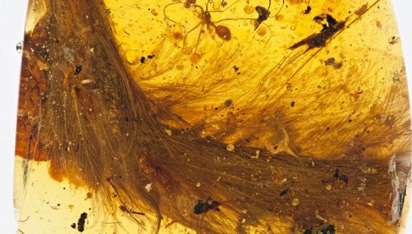 Невероятное открытие: ученые нашли хвост динозавра в куске янтаря. (5 фото)