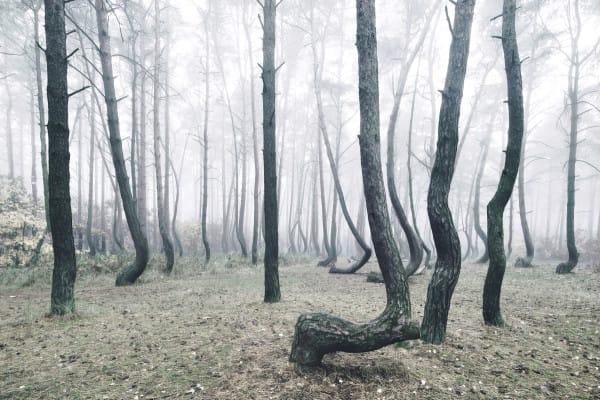 Также существует предположение, что деревья были повалены вражескими танками во время Второй мировой