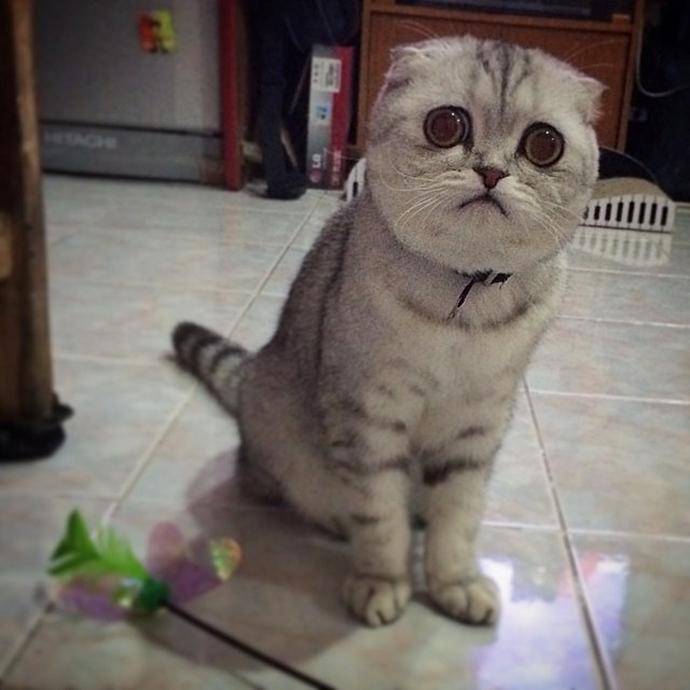 Самая грустная кошка в мире
