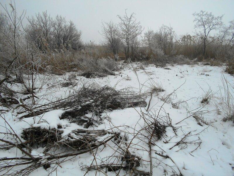 Пейзаж леса зимнего ... В походе декабрьском, снежно-туманном,