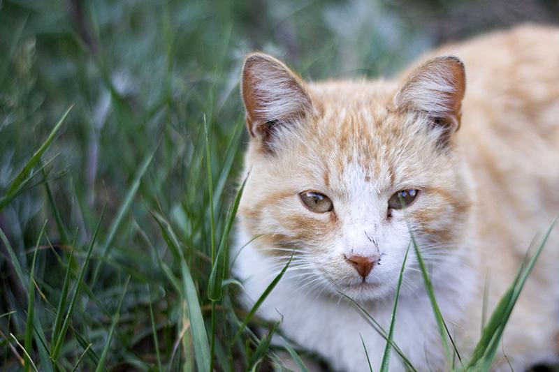 31 мая кот 3.jpg