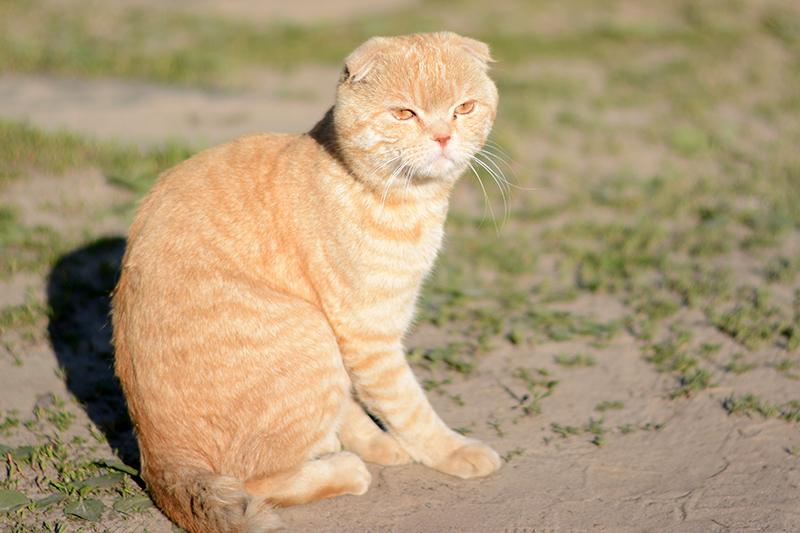 31 мая кот 4.jpg