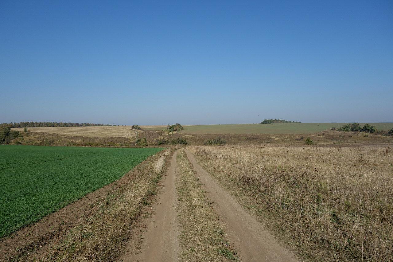 поля и перелески Рязанщины