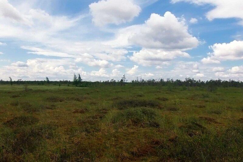 На Рдейском болоте (36).jpg