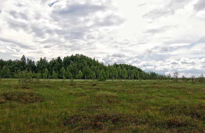 На Рдейском болоте (45).jpg