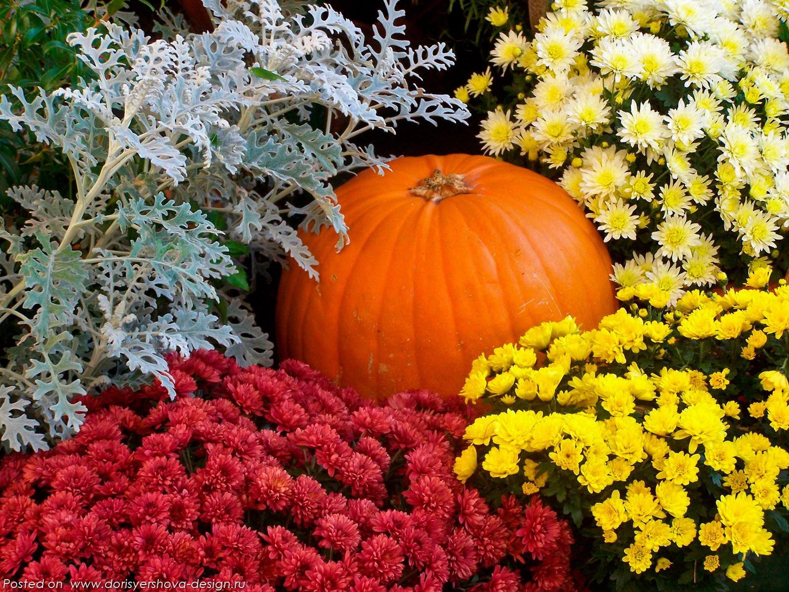 хризантемы, тыква, полынь, красный, оранжевый, желтый