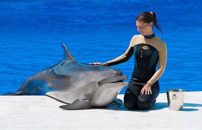 Беременная женщина и дельфин акушер 0 12e233 106c2e90 orig