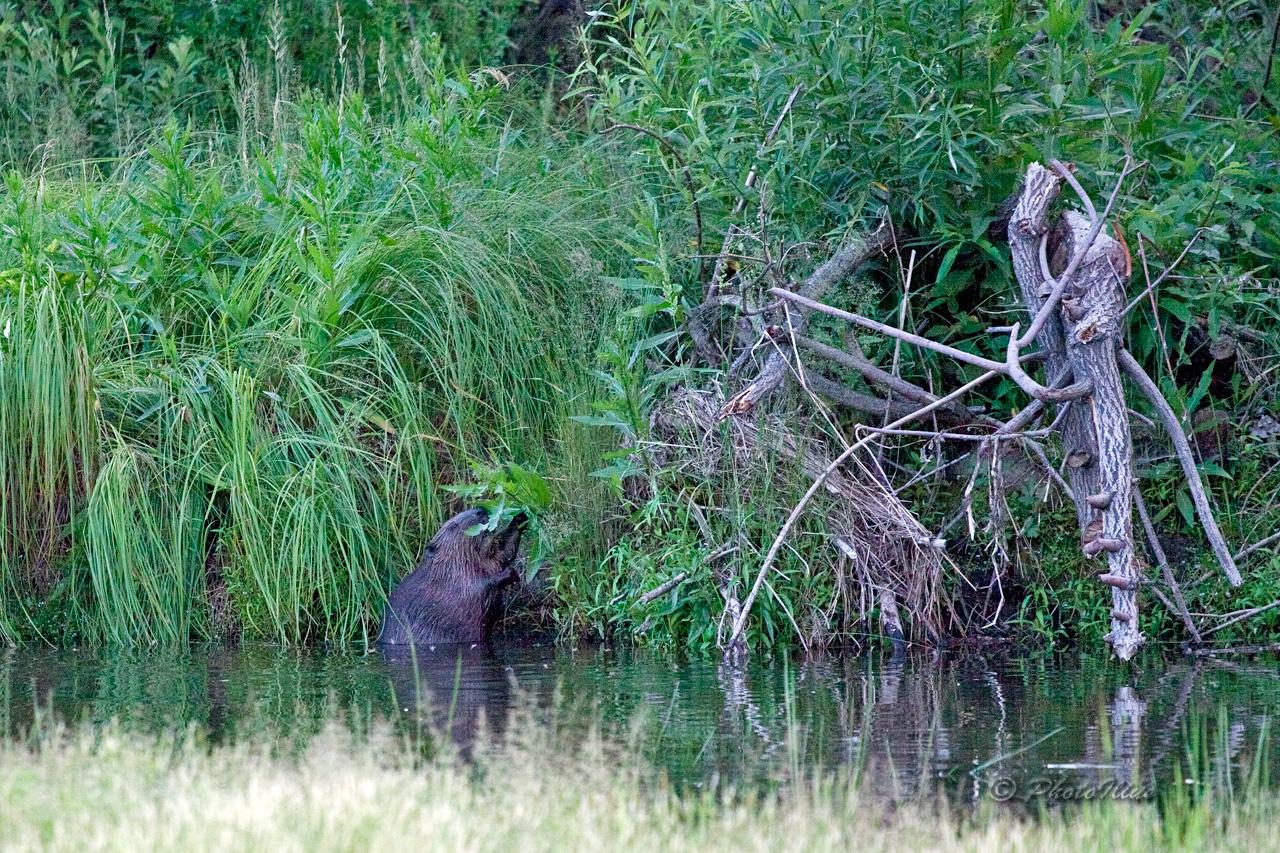джиу-джитсу боевое фото зебр волка и бобра строго