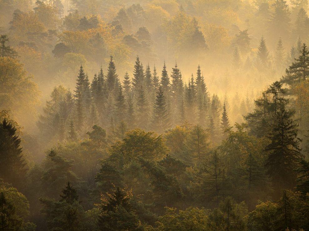 Утренний лес, Германия
