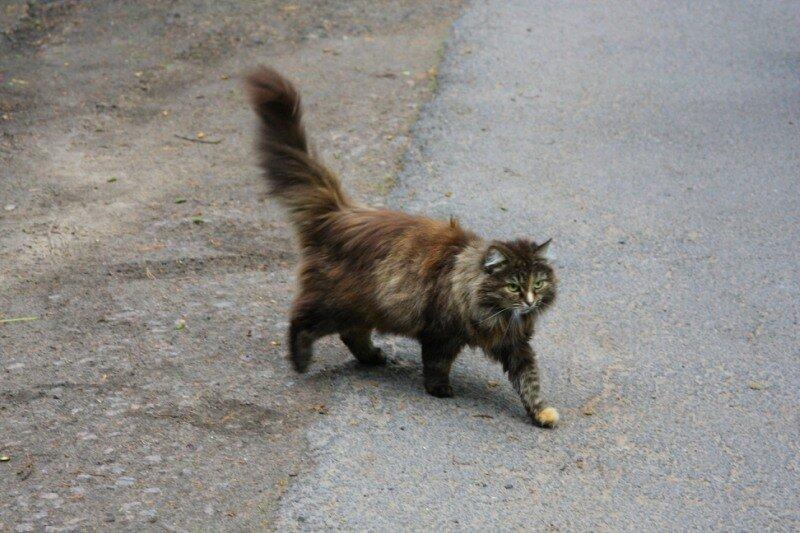Суровый репинский кот