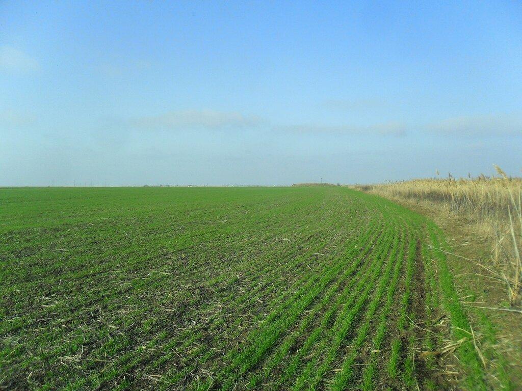 Готовится поле ... SAM_5504.JPG