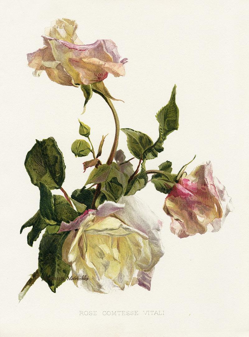 Ботанические картинки цветов 8