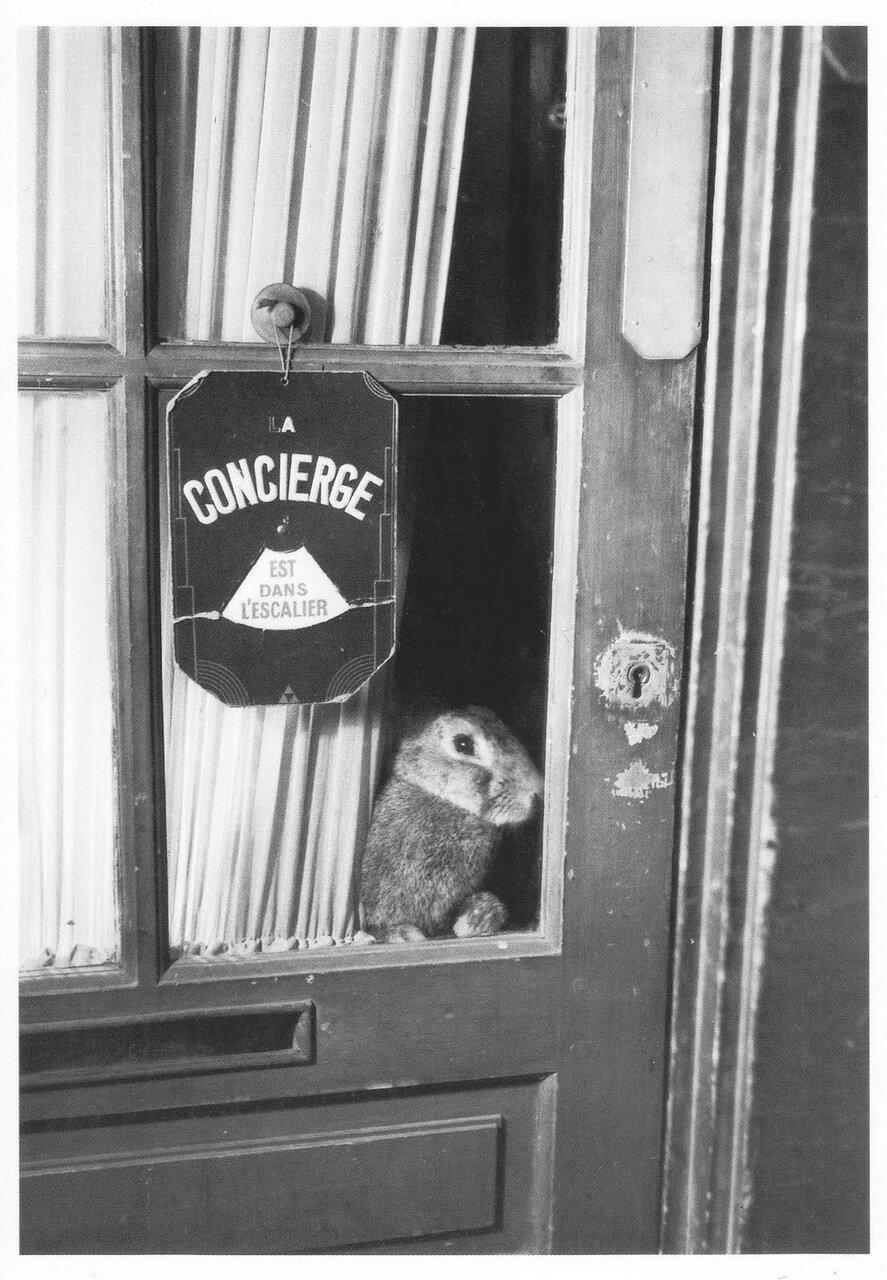 1946. Консьерж на лестнице