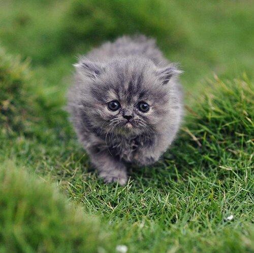 фото милый серый котенок