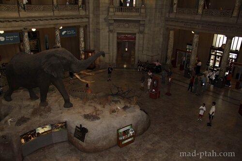 Вход в музей естественной истории, вашингтон