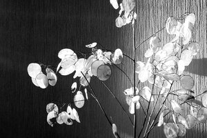 Leaves Balck&White