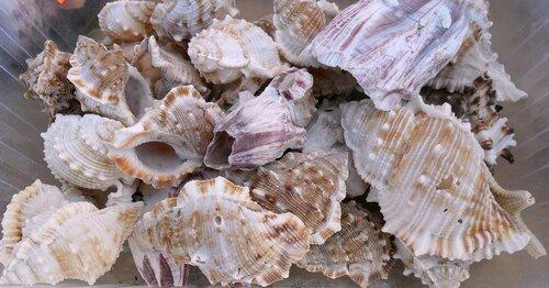 Морские раковины...