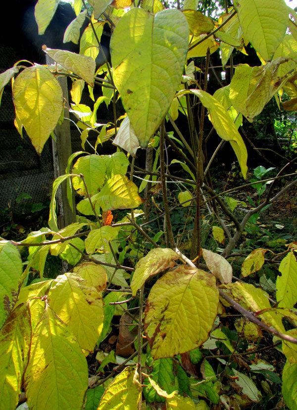 листья тож 123.jpg