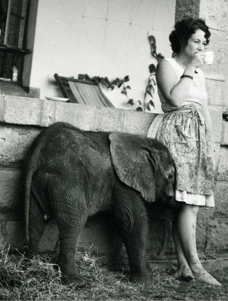 elefant want coffee.jpg
