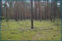 http://img-fotki.yandex.ru/get/4808/15842935.18a/0_d5daf_8bb611a_orig.jpg