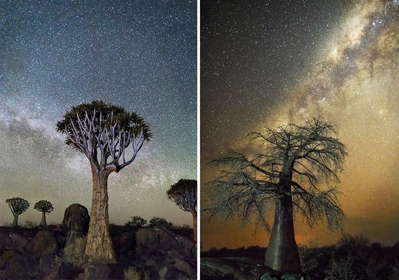 Фотограф Бет Мун: древние деревья Африки под звездным небом 0 136232 39c6b889 orig