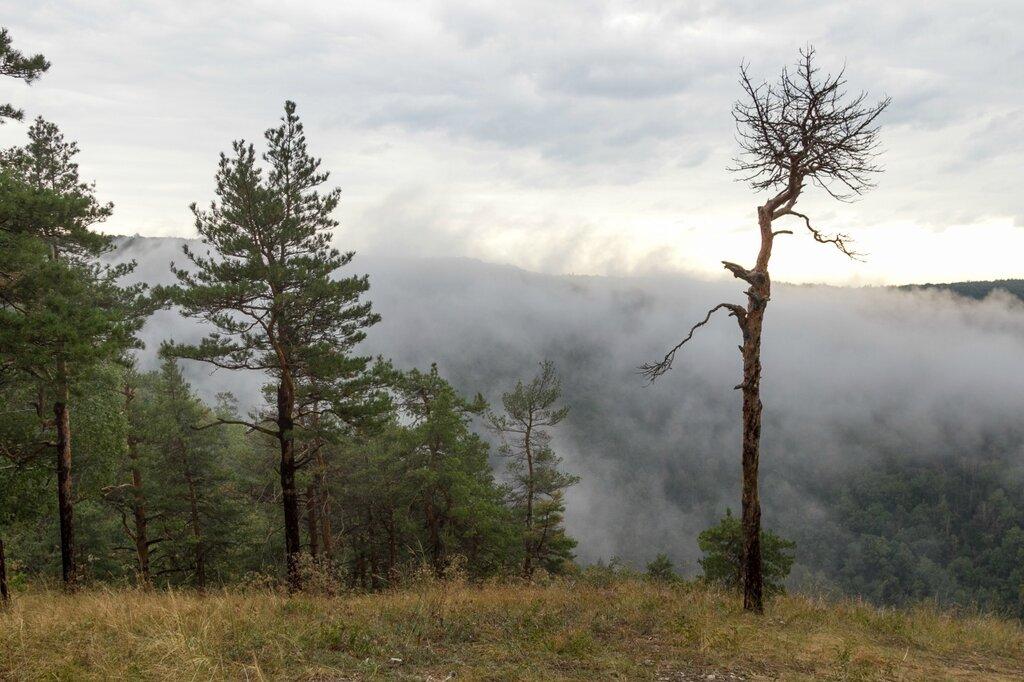 Облака, горы и сосны, Жигули, гора Стрельная
