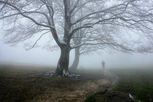 Я вижу тебя за дымкой тумана...