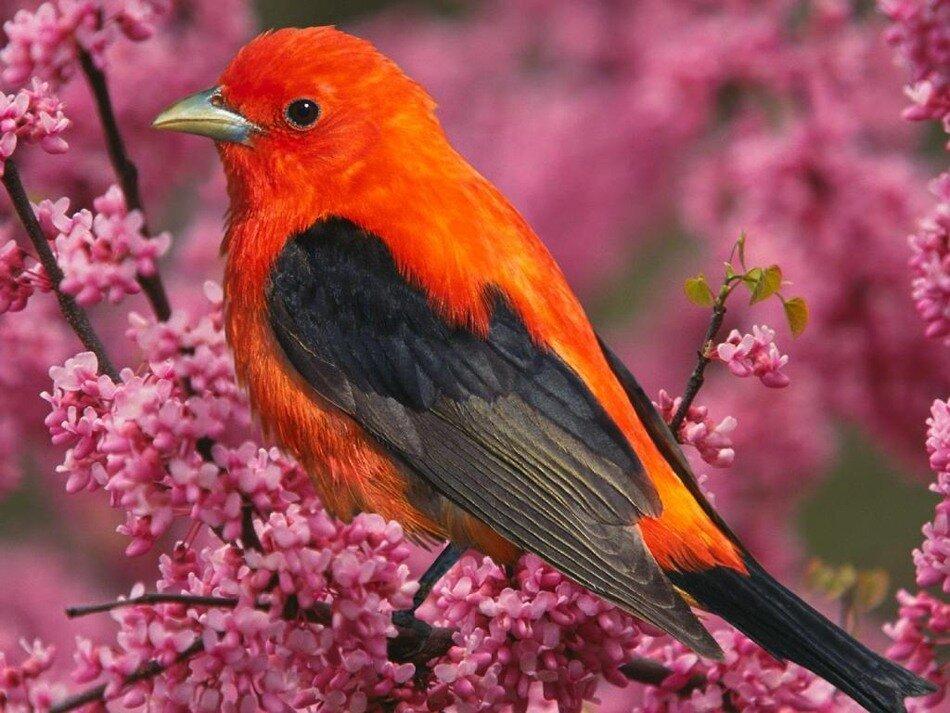Сервис знакомств, чат. Фото-Приколы. Красная птичка на ветке. Анекдоты.