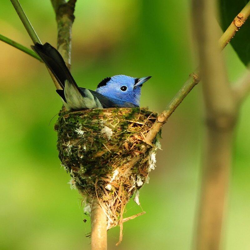 фото.  Категория записи:Свободные темы. позитив.  Теги. картинки. красота. птицы.
