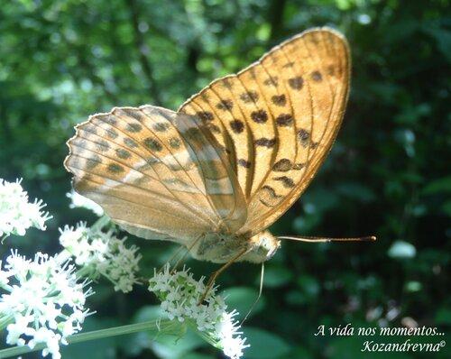 бабочка в ущелье