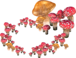 fairy_ring.png