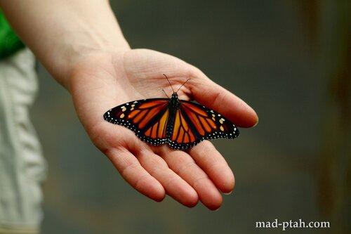 тенерифе, икод-де-лос-винос, бабочки
