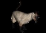 сиамские кошки (3).png