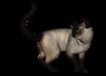сиамские кошки (18).png