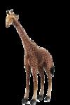 африка животные 0_509a3_a17f49ff_S