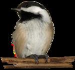 Птицы  разные  0_51c58_5ca2fcde_S