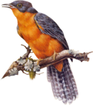 Птицы  разные  0_51c9d_29e0de4a_S