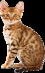 Кошки 5 0_53a61_d4e5c0ad_S