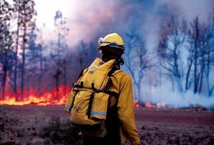 Режим ЧС из-за лесных пожаров введён ещё в одном районе Приморья
