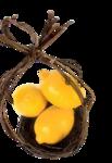цитрусы (74).png