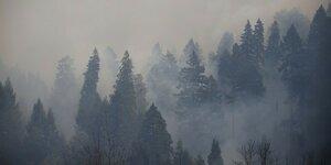 Дым от пожаров в России достиг берегов США